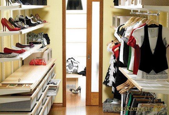 Дизиготека уход в домашних условиях фото